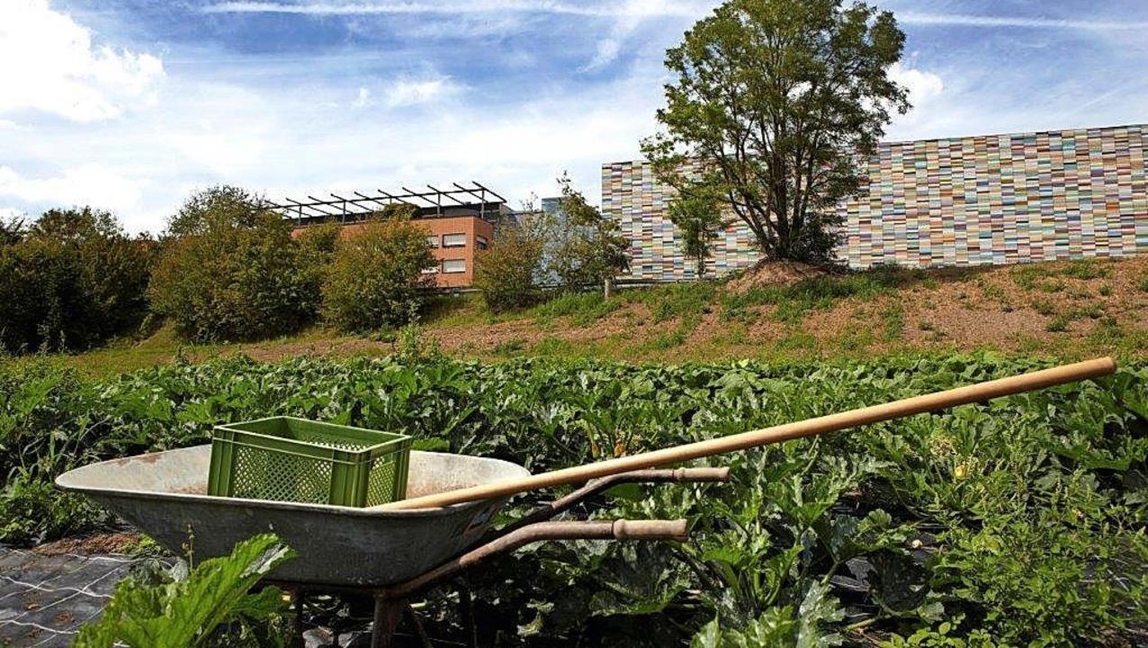 Das Gemüse kommt direkt vom Feld in di...ntine in den  Gebäuden im Hintergrund.  | Foto: Sedus