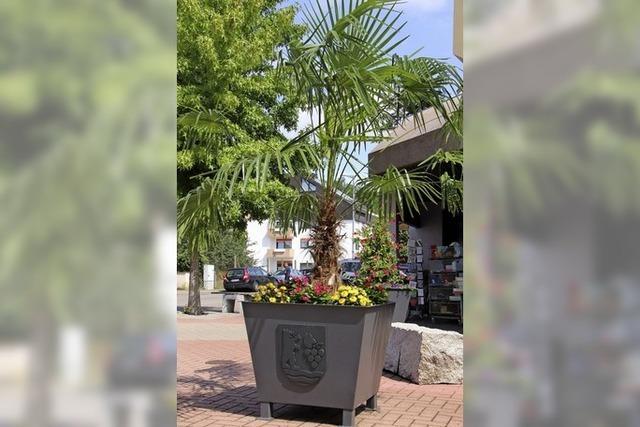 Blumenkübel mit Wappen sorgen für Sommerflair
