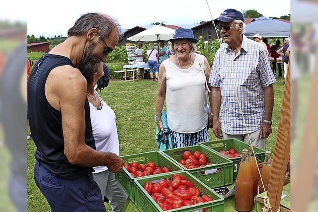 Auch Tomaten bekommen Sonnenbrand