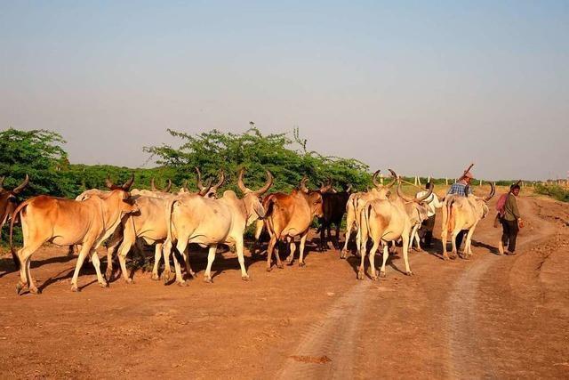 Wehr hilft Indien mit Kühen
