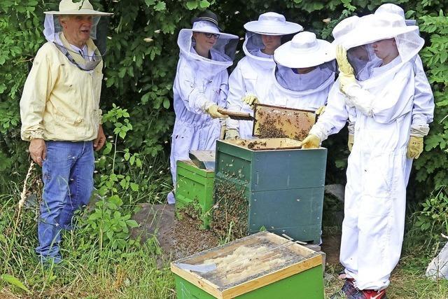 Honig – der Stolz jedes Imkers