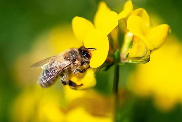 Premiere im Land: Der Weg für das Bienen-Volksbegehren ist frei