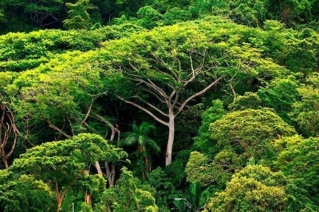 Der Wald muss geschützt werden