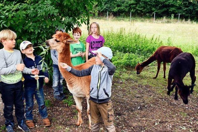 Bei den Tiererlebnistagen auf dem Mundenhof gibt es für Kinder viel zu entdecken