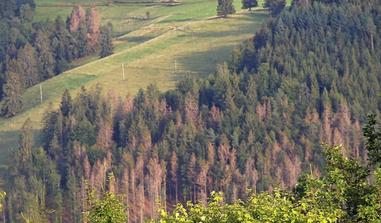 Im ganzen Wiesental hat das Dürrejahr ... von Häg-Ehrsberg Richtung Tal zeigt.     Foto: Monika Weber