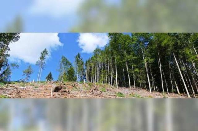 10 Millionen Euro Waldschaden durch Sturm und Hitze im Kreis Lörrach