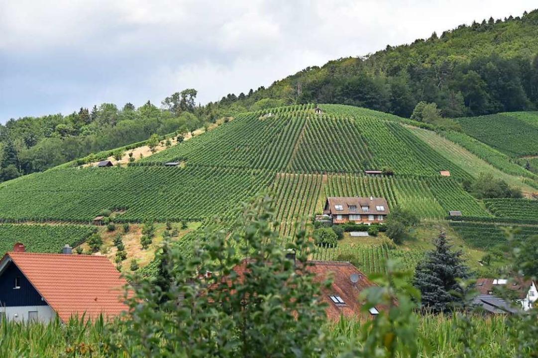 Wein ist eines der wichtigsten Anbaupr...chen  das Kulturgut näher zu bringen.   | Foto: Sebastian Krüger