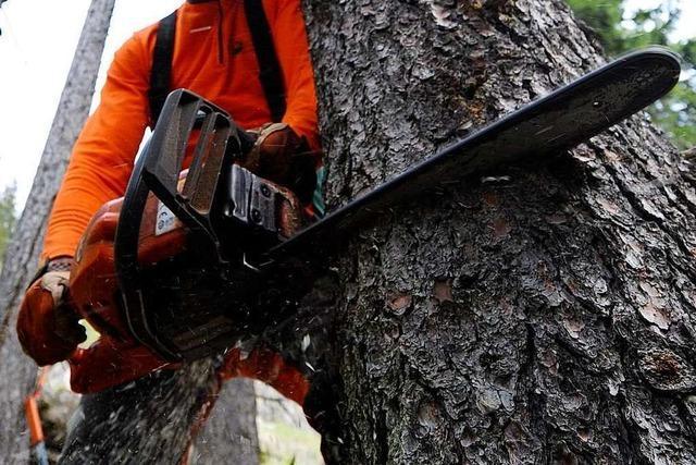 Narrenbaum im Kleinen Wiesental umgesägt