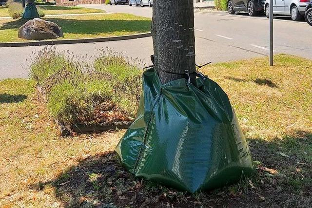 Gundelfingen setzt Spezialsäcke zur Bewässerung von Bäumen ein
