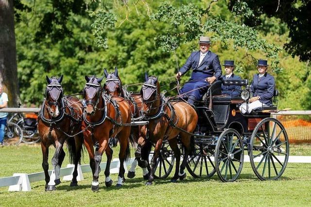 Gespannfahren in Donaueschingen: Mit vier Pferdestärken durchs Gelände