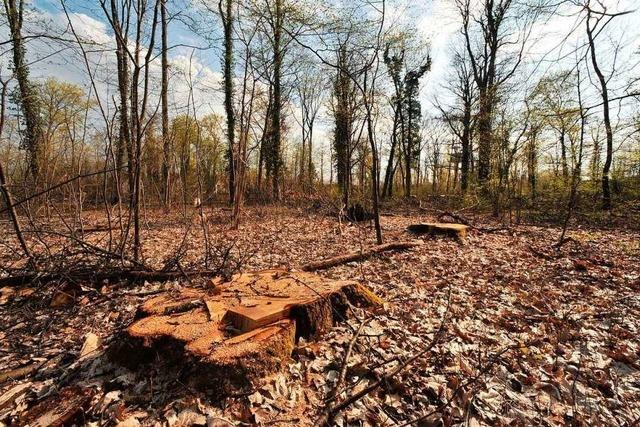 Die geplante Abholzung für Parkplätze am Keidel-Bad wird zum Aufreger