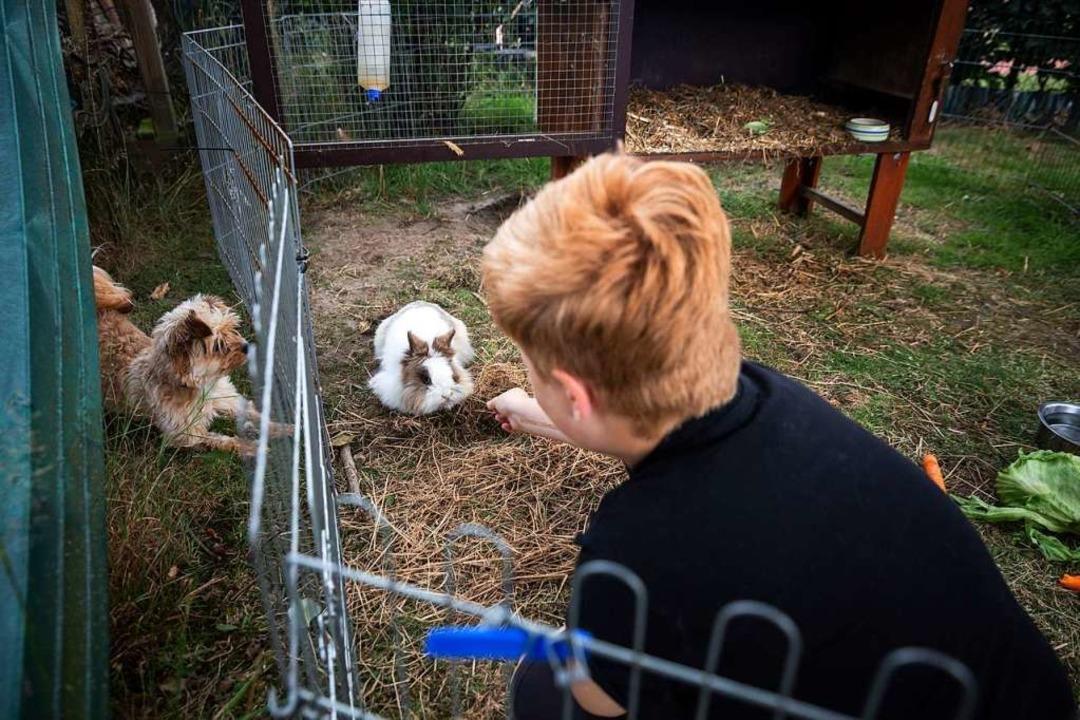 Jonte füttert sein Kaninchen.  | Foto: Bernd Kramer