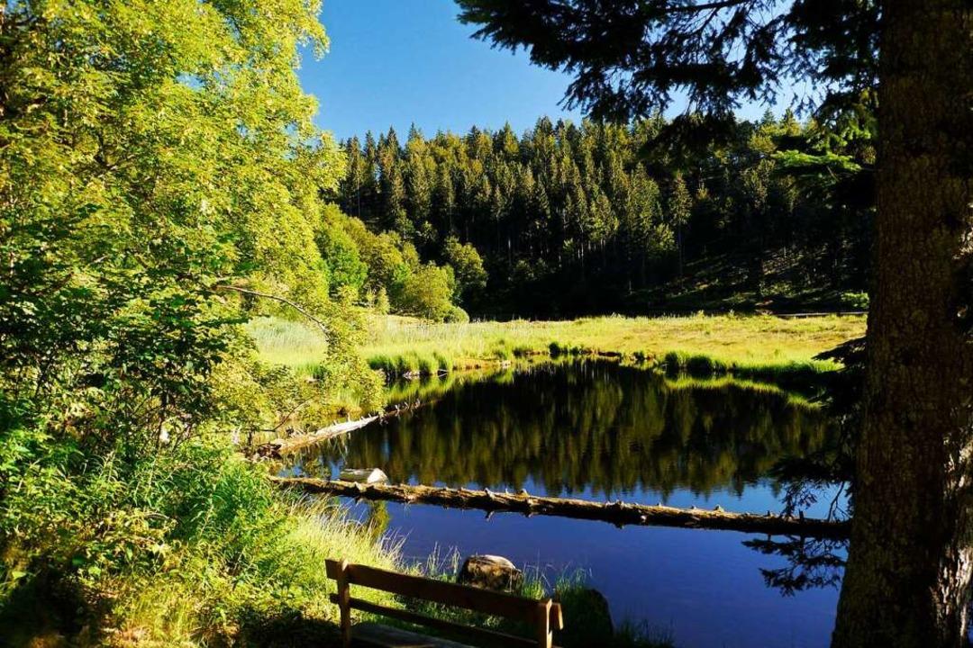 Das Wasser des Nonnenmattweihers spiegelt den Wald wider.    Foto: Martina David-Wenk