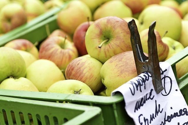 Neue Ernte auf dem Münstermarkt