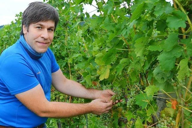 Die meisten Winzer und Obstbauern sind nicht gegen Hagelschäden versichert