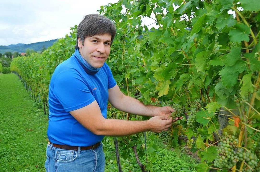 Winzer Thomas Behringer (39) aus Britz...Hagelschäden an seinen Gutedel-Trauben  | Foto: Stefan Hupka