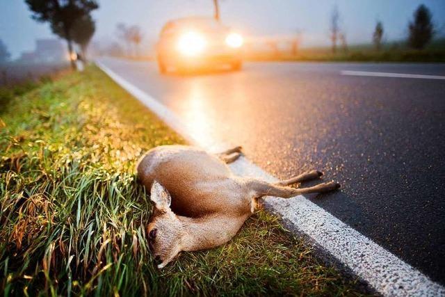 Jäger erklären, was Autofahrer nach einem Wildunfall tun sollten