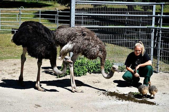 Im Mundenhof in Freiburg sterben immer wieder Tiere, weil Besucher sie füttern