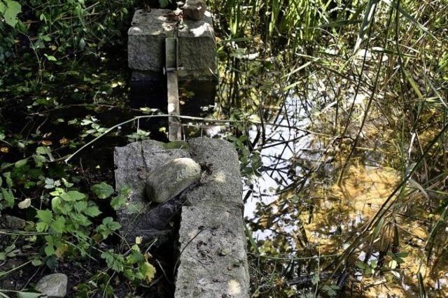 Ein seltenes Naturdenkmal