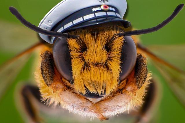 Bienen als Polizeischnüffler?