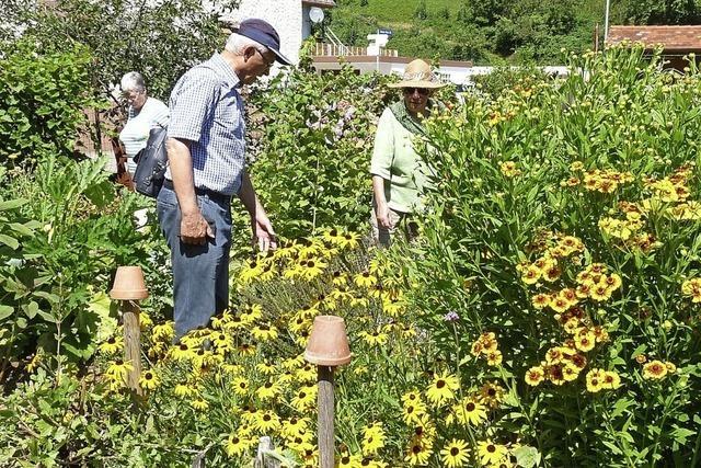 Mancher Blumenliebhaber kam nach Oberprechtal