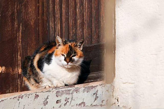 Eine Friesenheimer Tierärztin erklärt, warum Katzen Wasser nicht mögen