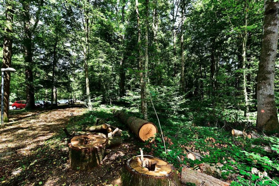 In diesem Waldstück neben dem Eugen-Ke...erden, um neue Parkplätze zu schaffen.    Foto: Thomas Kunz