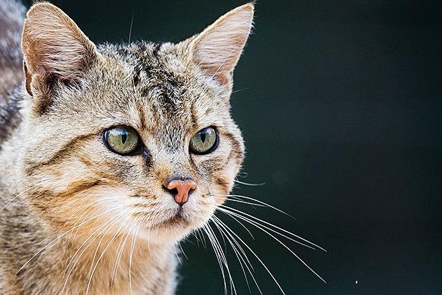 Tierärztin erklärt, warum Katzen Wasser nicht mögen