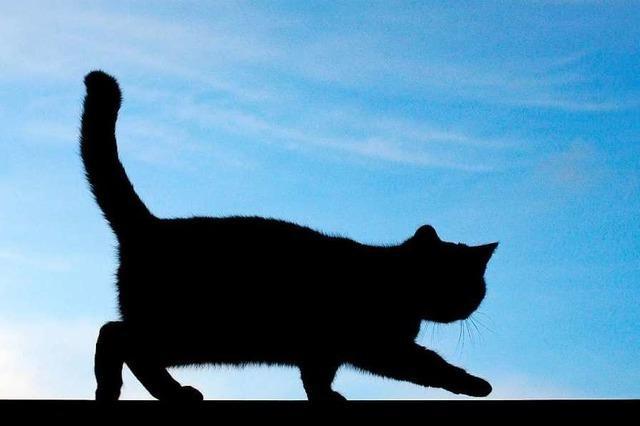 Tote Katze mit abgezogenem Fell im Schwarzwald gefunden