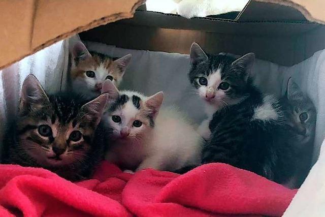 55 Katzenbabys bringen die Mitarbeiter im Tierheim an ihre Grenzen