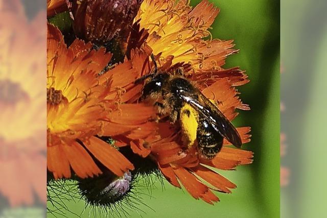 Insekten entdecken am Wiesenufer