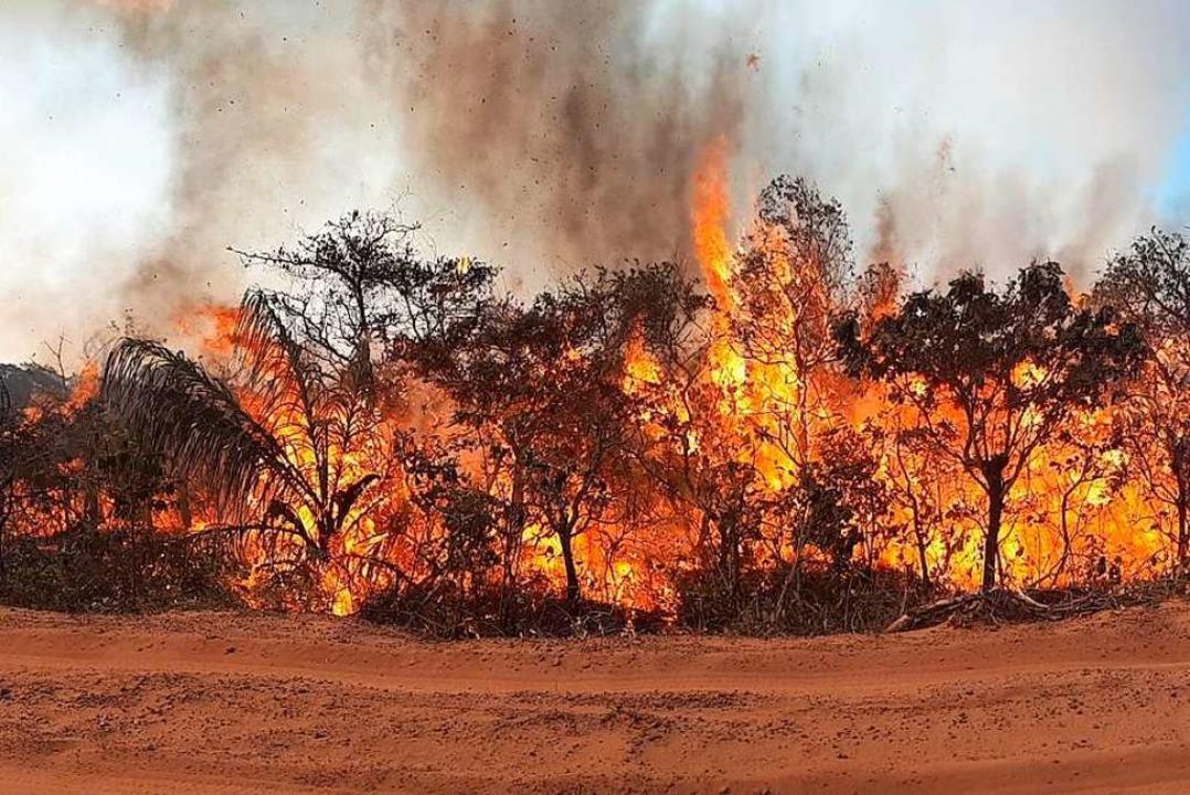 Seit Wochen wüten Tausende Feuer im Am... und den angrenzenden Steppengebieten.  | Foto: Christian Niel Berlinck (dpa)