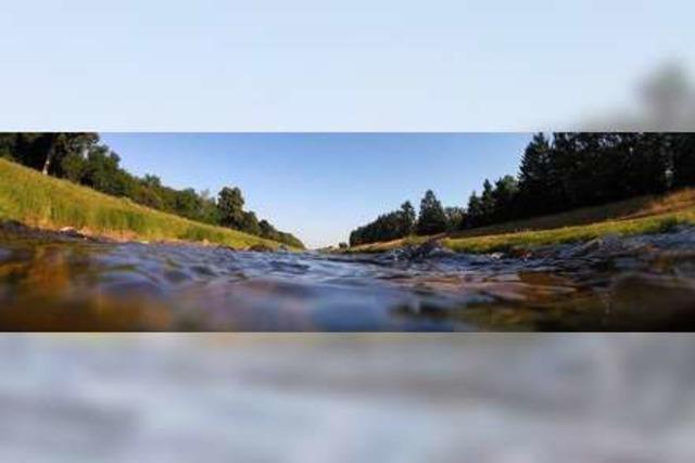 Dossier: Der Leopoldskanal – von Riegel zum Rhein