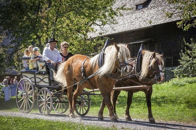 Das Freilichtmuseum Vogtsbauernhof feiert den Höhepunkt des Sommerferienprogramms mit vielen Aktionen