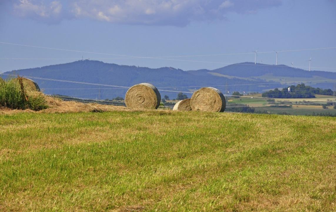 In diesem Jahr können die Landwirte au...end Heu in bester Qualität einfahren.     Foto: Jutta Schütz