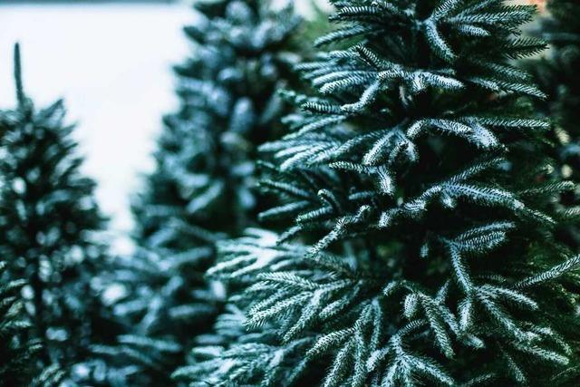 Ist der Weihnachtsbaum öko?