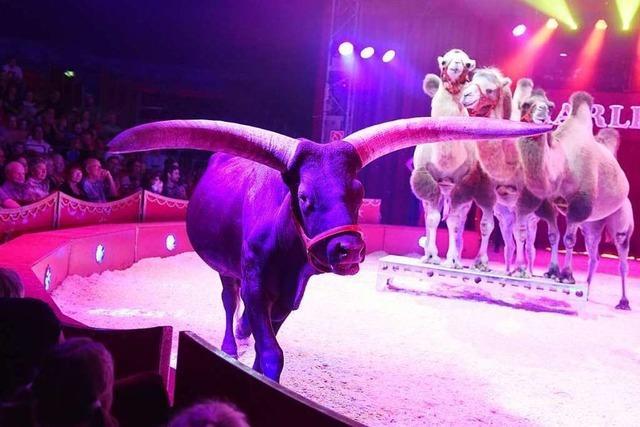 Fotos: Atemberaubende Akrobatik und Tiere im Zirkus Charles Knie