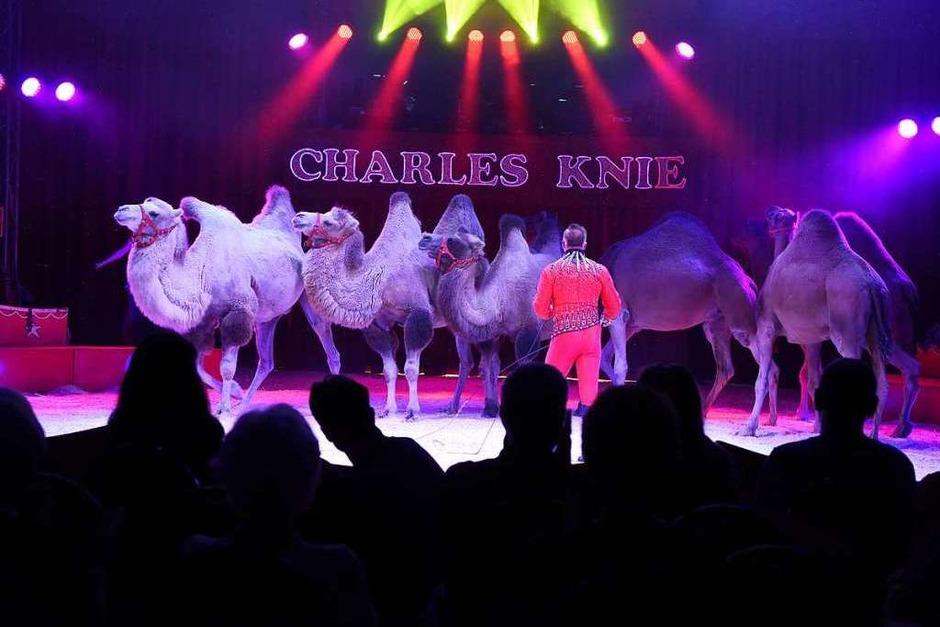 Zirkuskunst vom feinsten (Foto: Rita Eggstein)