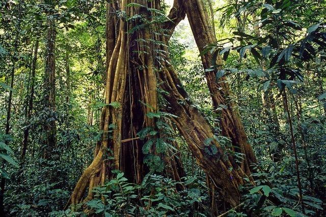 Wald außer Kontrolle