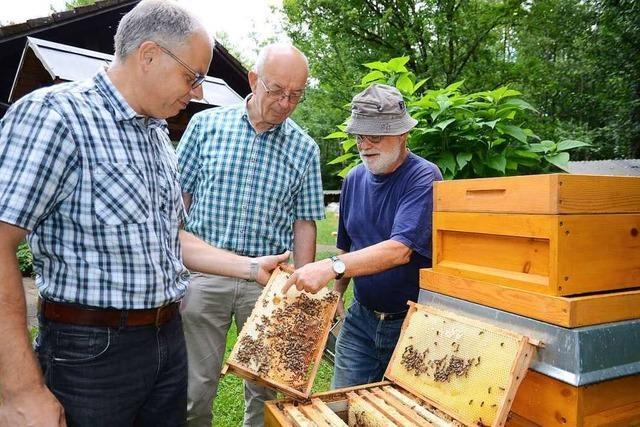 Forschungsprojekt für widerstandsfähigere Bienen