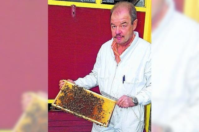Bakterien bedrohen Bienen