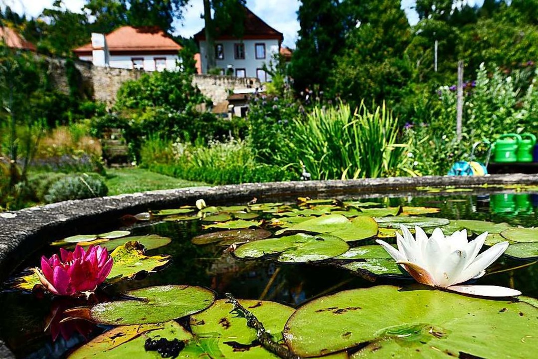 Sehr idyllisch: das Becken mit den See...tten im Garten des ehemaligen Klosters  | Foto: Thomas Kunz