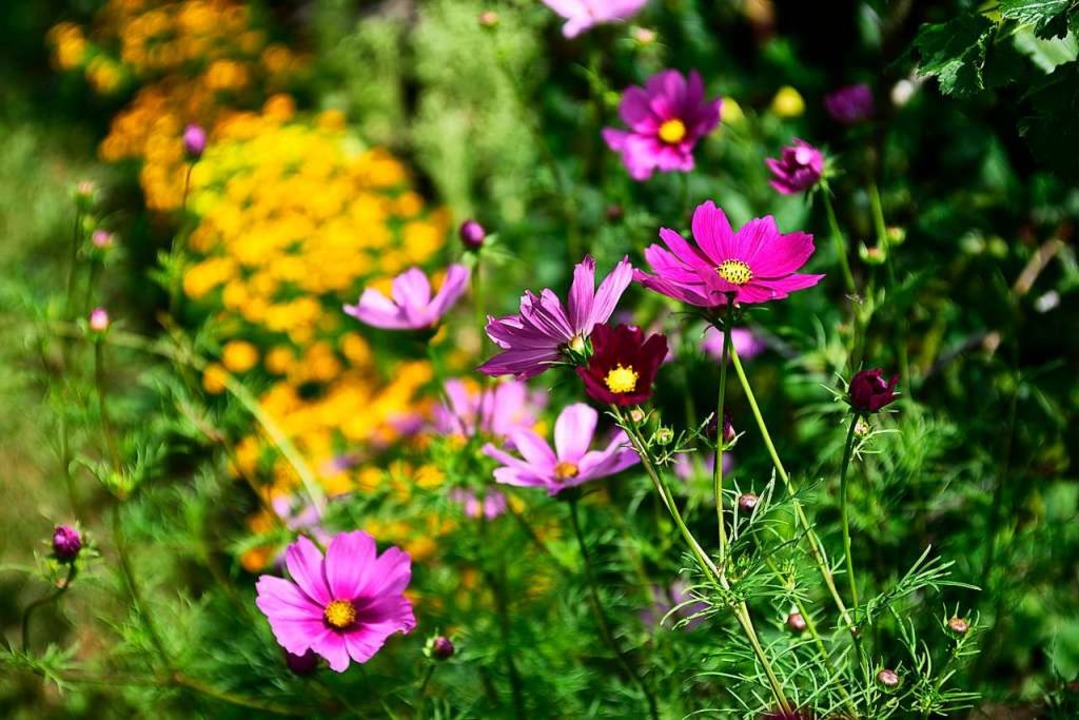 Farbenprächtige  Blumen  | Foto: Thomas Kunz