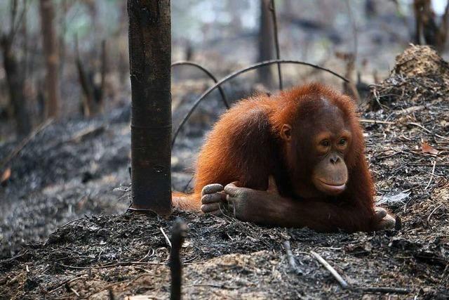 Warum ist der Schutz der Arten notwendig?