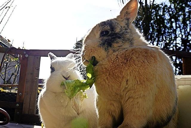 Kaninchen im Sonnenschein