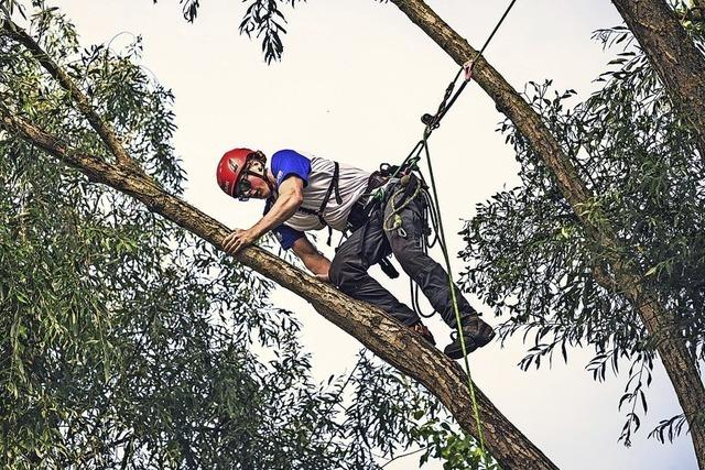 Baumpfleger klettern um die Wette