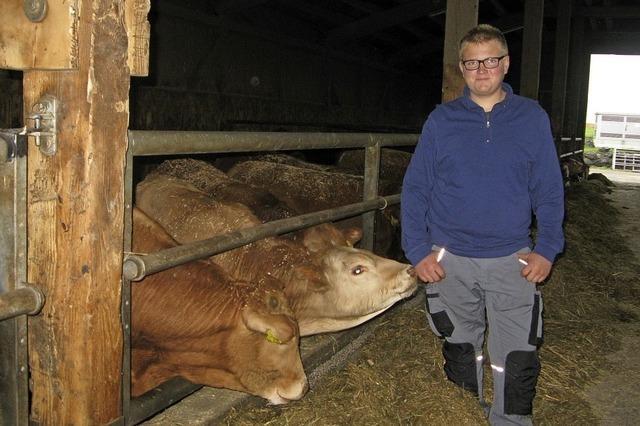 Kühe, Weiden und Maschinen
