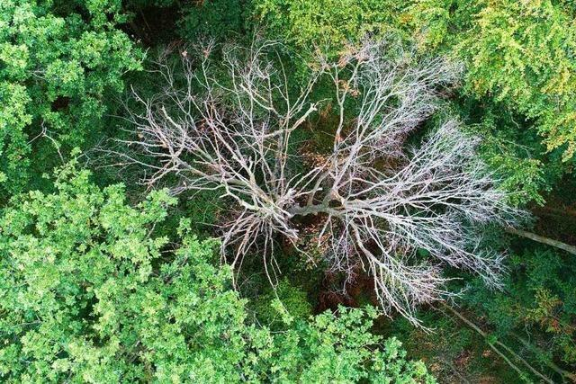 Klimafester Waldumbau dauert mindestens bis zum Jahr 2100