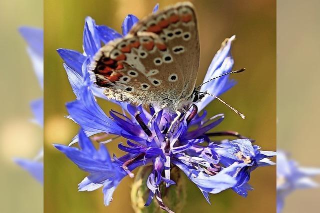 Schlaraffenland für Schmetterlinge