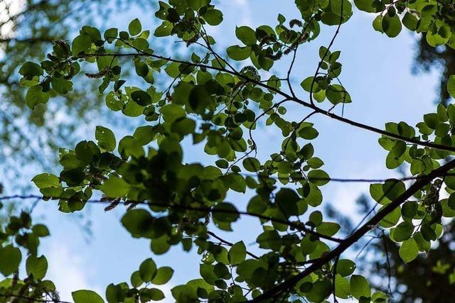 Agrarminister Hauk legt Notfallplan für den Wald vor